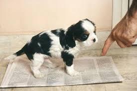 Escogiendo al Perro Adecuado