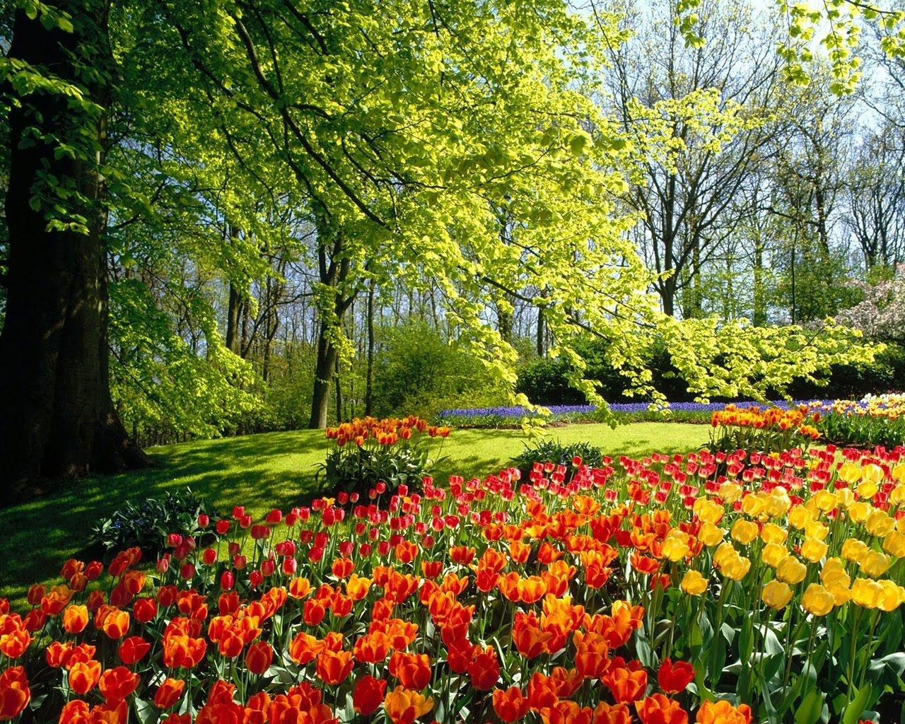 http://4.bp.blogspot.com/-N0bGQmfLGqc/Tai0fo8fzXI/AAAAAAAAAHg/iJc-HrHDWbM/s1600/spring_park_wallpaper_spring_nature_wallpaper_1280_1024_1215.jpg