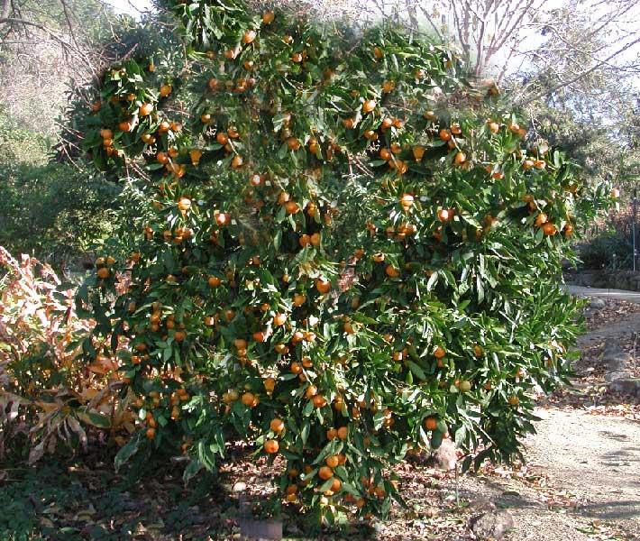 orto per tutti piante da frutto agrumi