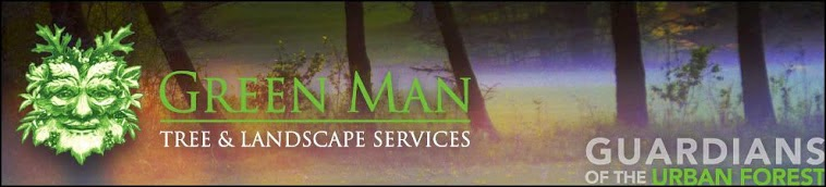 Tree Services Waukesha and Milwaukee