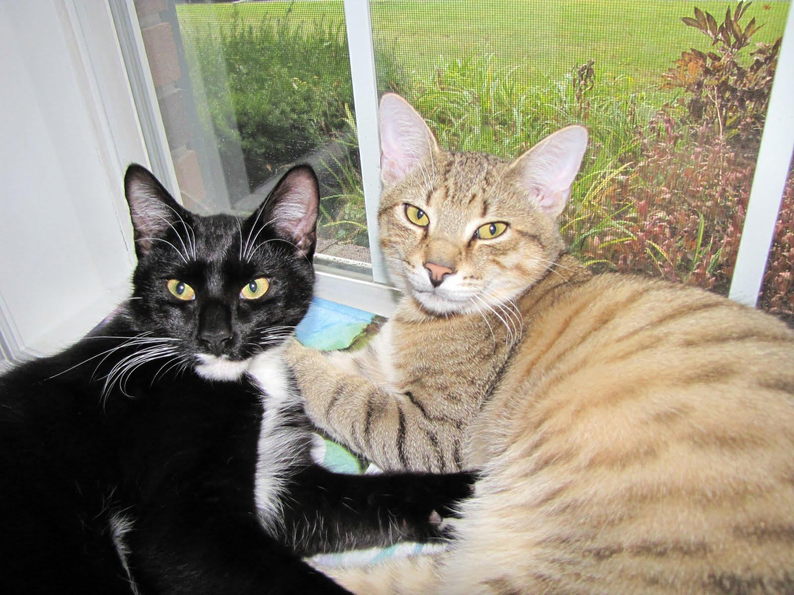 Dorian and Jasper (my fur babies)