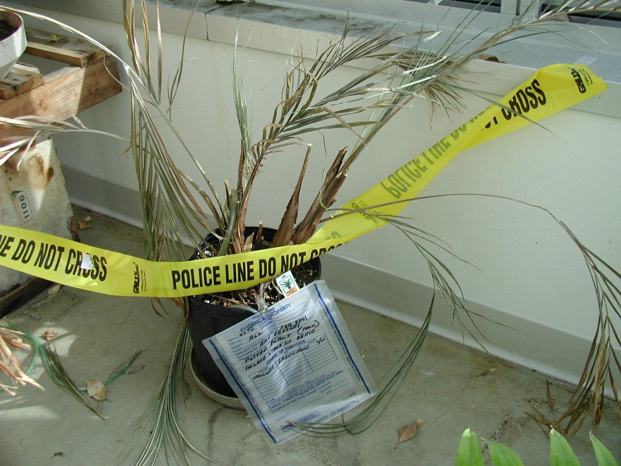 http://4.bp.blogspot.com/-N1TiWJonMQc/TdCRh5rmGDI/AAAAAAAABk8/1PExgbnH56Y/s1600/dead_plant_P2190004.jpg