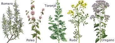 plantas medicinales,curar con plantas,romero,tomillo