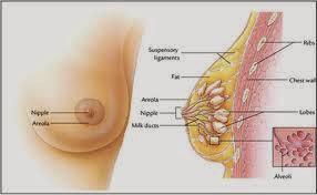 Jangan Anggap Remeh, Kanker Payudara Bisa Serang Pria Wanita