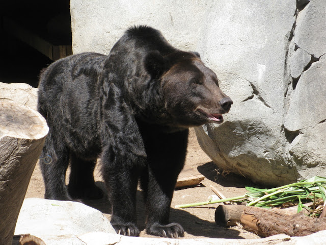 murrieta365 grizzly bear zoo