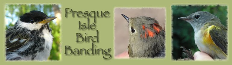 Presque Isle State Park Bird Banding