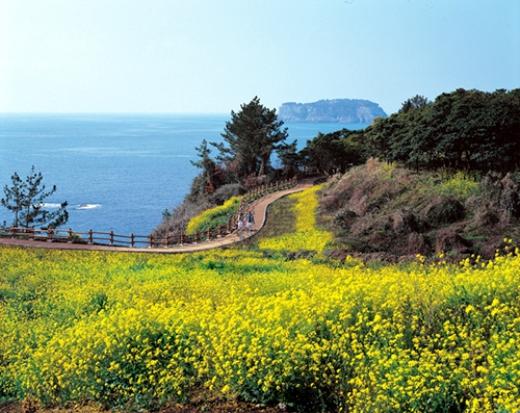 A ilha Jeju - Foto5