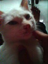 i loike this cat .