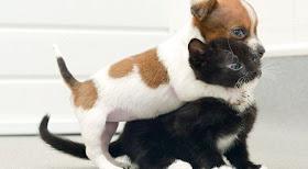 Persahabatan Anjing Dan Kucing Ini Seperti Saudara [ www.BlogApaAja.com ]