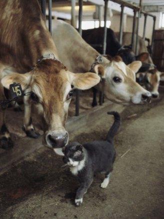 Sen neden kedi yemiyorsan ben o yüzden inek yemiyorum.