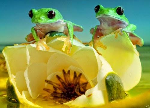09-Wil-Mijer-Frog-Macro-Photography-www-designstack-co