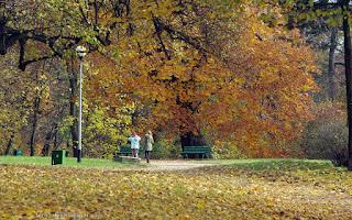 http://fotobabij.blogspot.com/2015/12/puawy-park-awki-pod-jesiennym-klonem.html