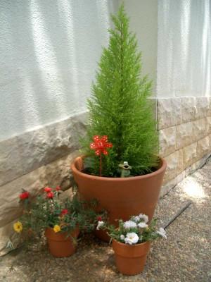 Flores de maceta macetas para tu casa - Macetas para pared ...