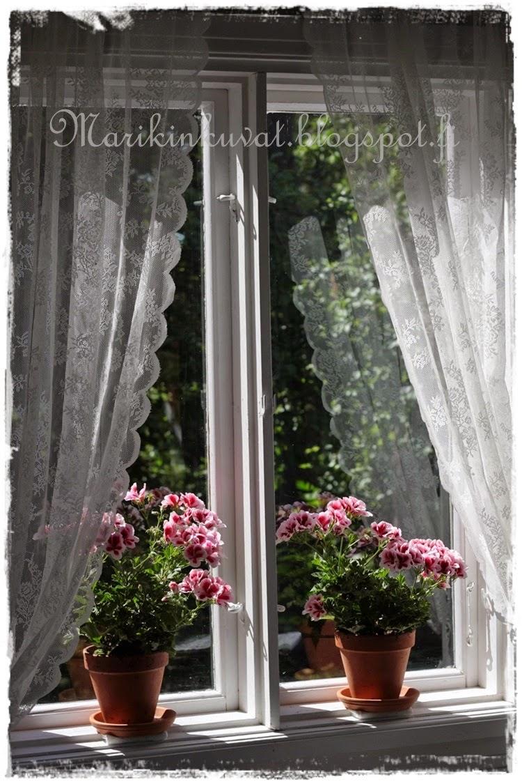 Vanhan akkunan pelargoniat