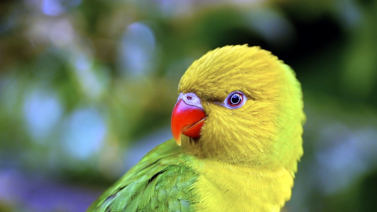 Parrot beak - photo#7