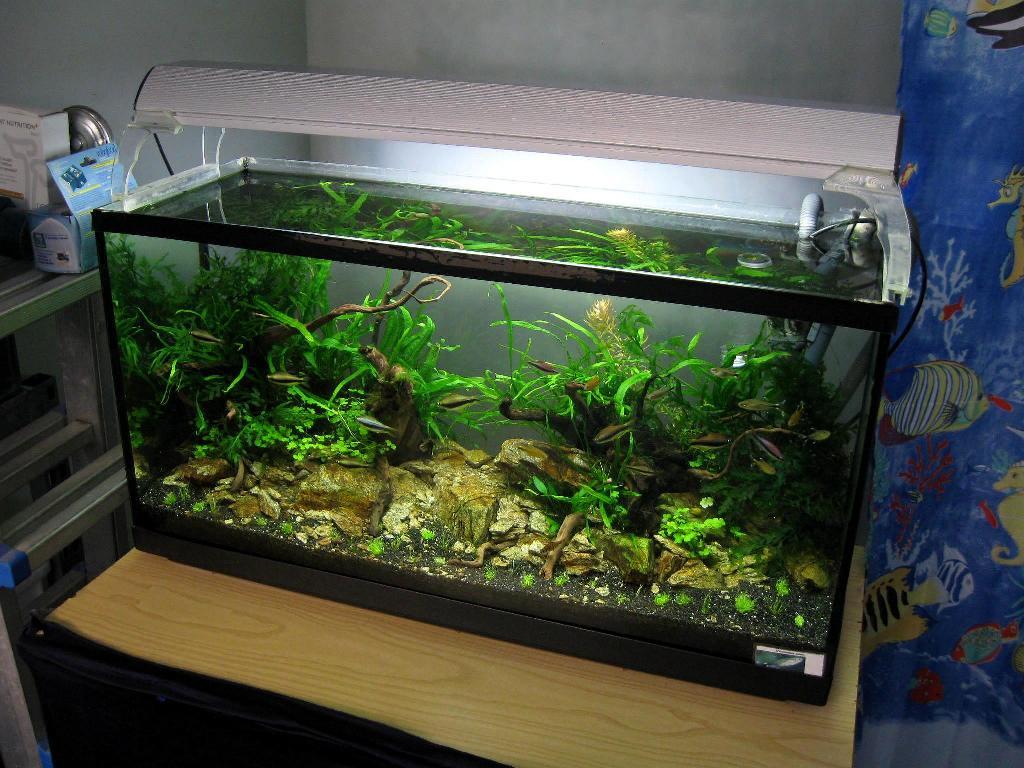 Aqua experience 80 x 42 x 30 for Acquario a colonna