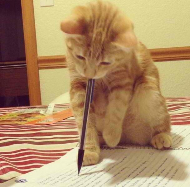 writing cat, funny cat pictures, funny cats