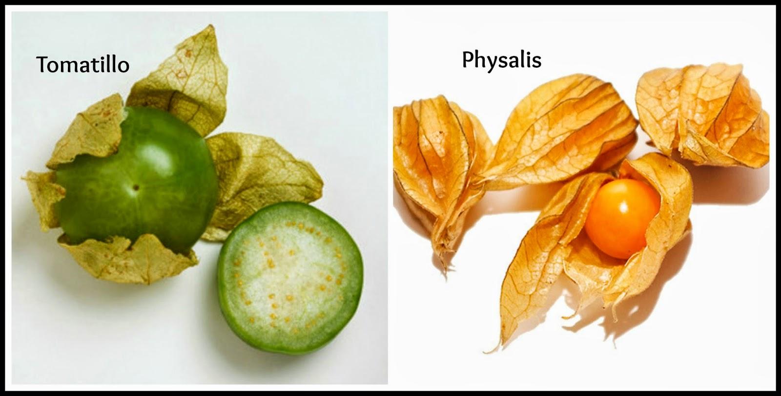 physalis tomatillo