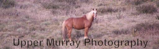 Upper Murray Photography