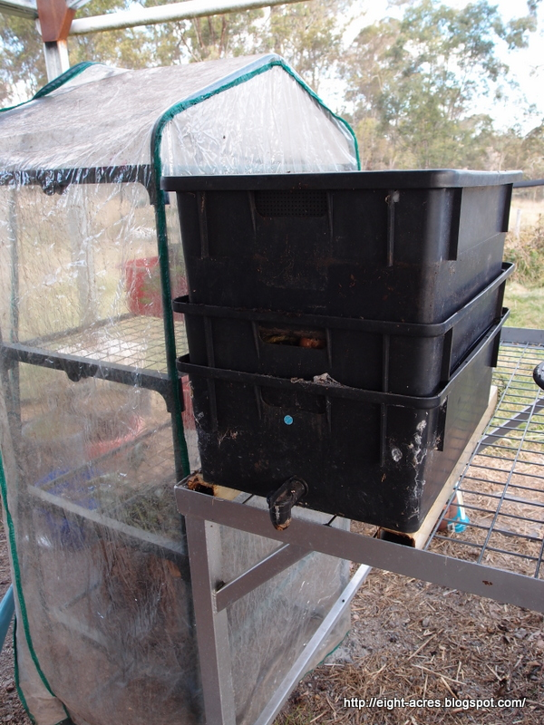 Worm bin maintenance australia