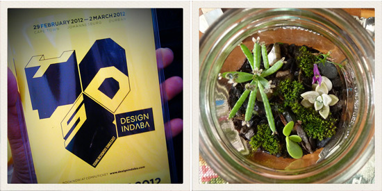 The Design Indaba Simulcast and a terrarium.