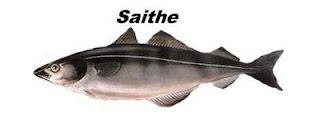 Peixe tipo bacalhau Saithe