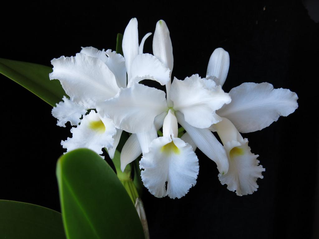 Orchid Id The British Identification Screenshot 7