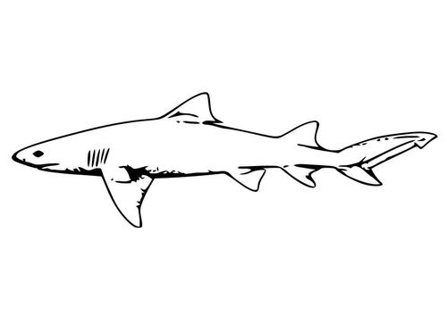 Colorear dibujos de animales marinos  Colorear y Pintar ...