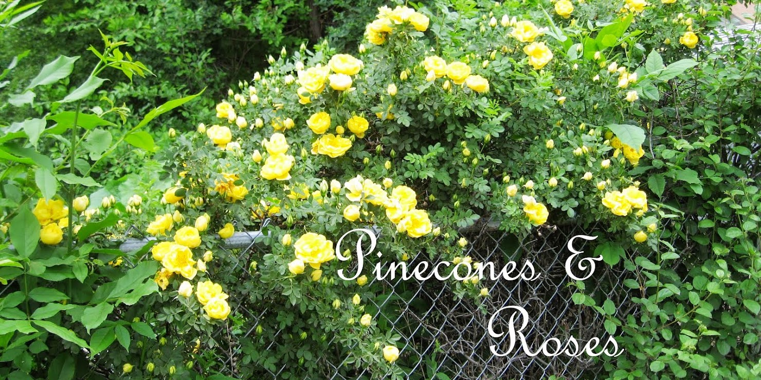 Pinecones &amp; Roses