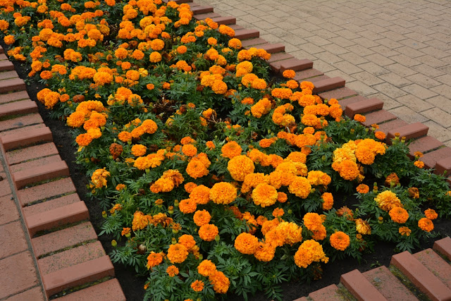 Blankenberge Pier Flowers