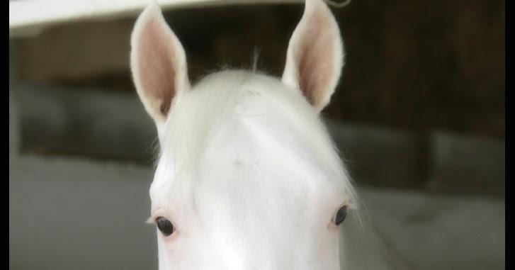 rita equestrian pelagens unicolores