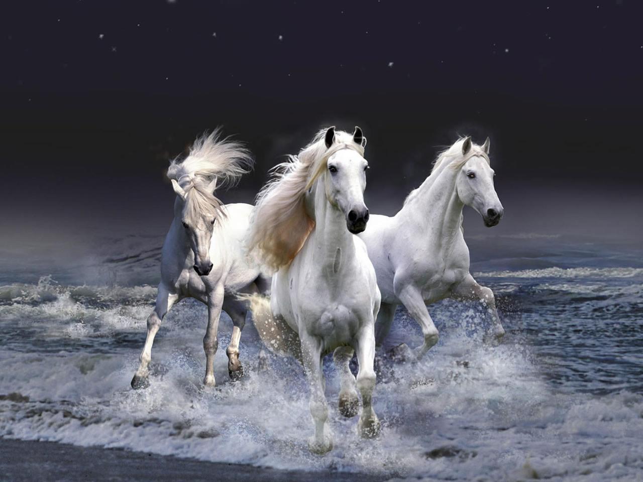 Fantastic   Wallpaper Horse Beauty - Beautiful+White+Horse+2  HD_161578.jpg