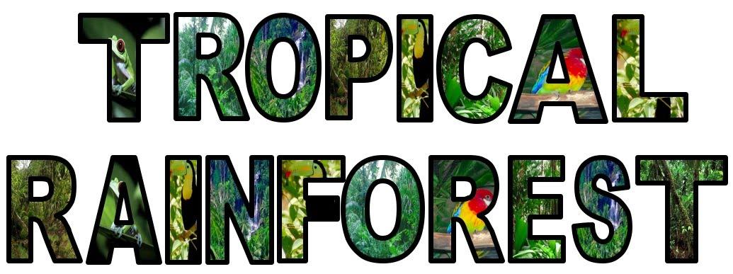 Rainforest display lettering for Display lettering