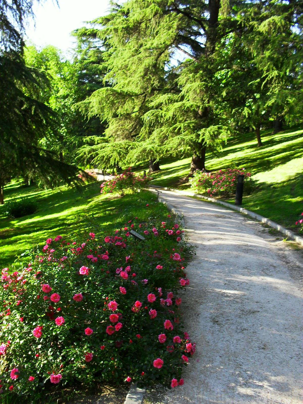 Arte y jardiner a el jard n de rosas for Residencia el jardin madrid