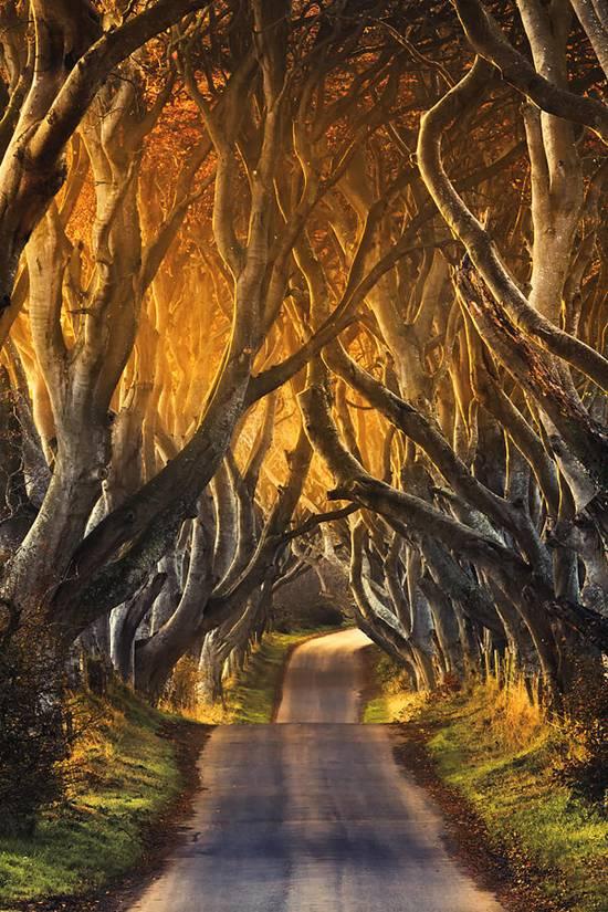 Top 10 Beautiful Tree Tunnels
