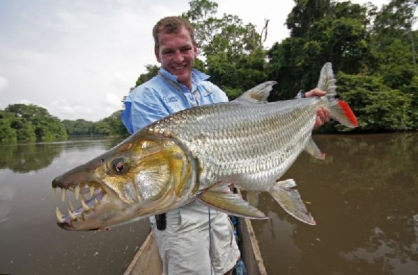 Images for goliath tiger fish river monsters horrible for Tiger fish pictures