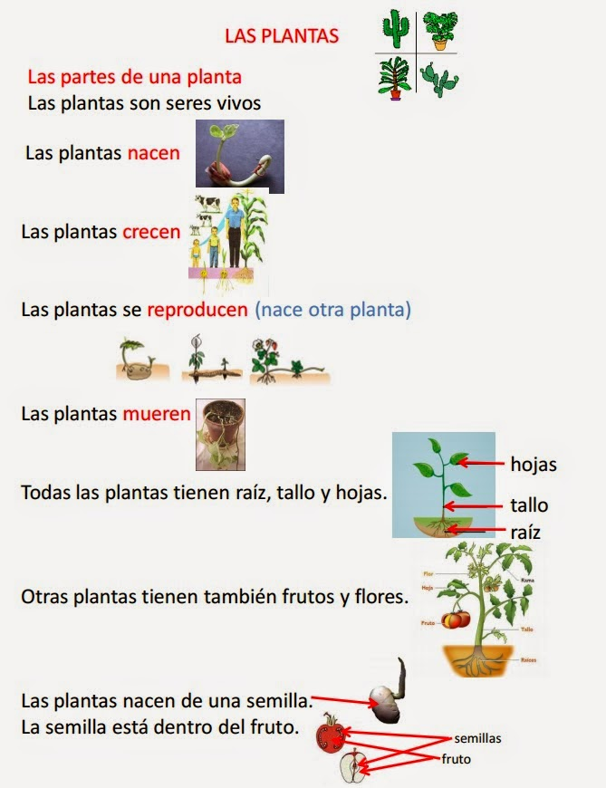 file:///C:/Documents%20and%20Settings/-/Mis%20documentos/Downloads/LAS%20PLANTAS%202%C2%BA.pdf
