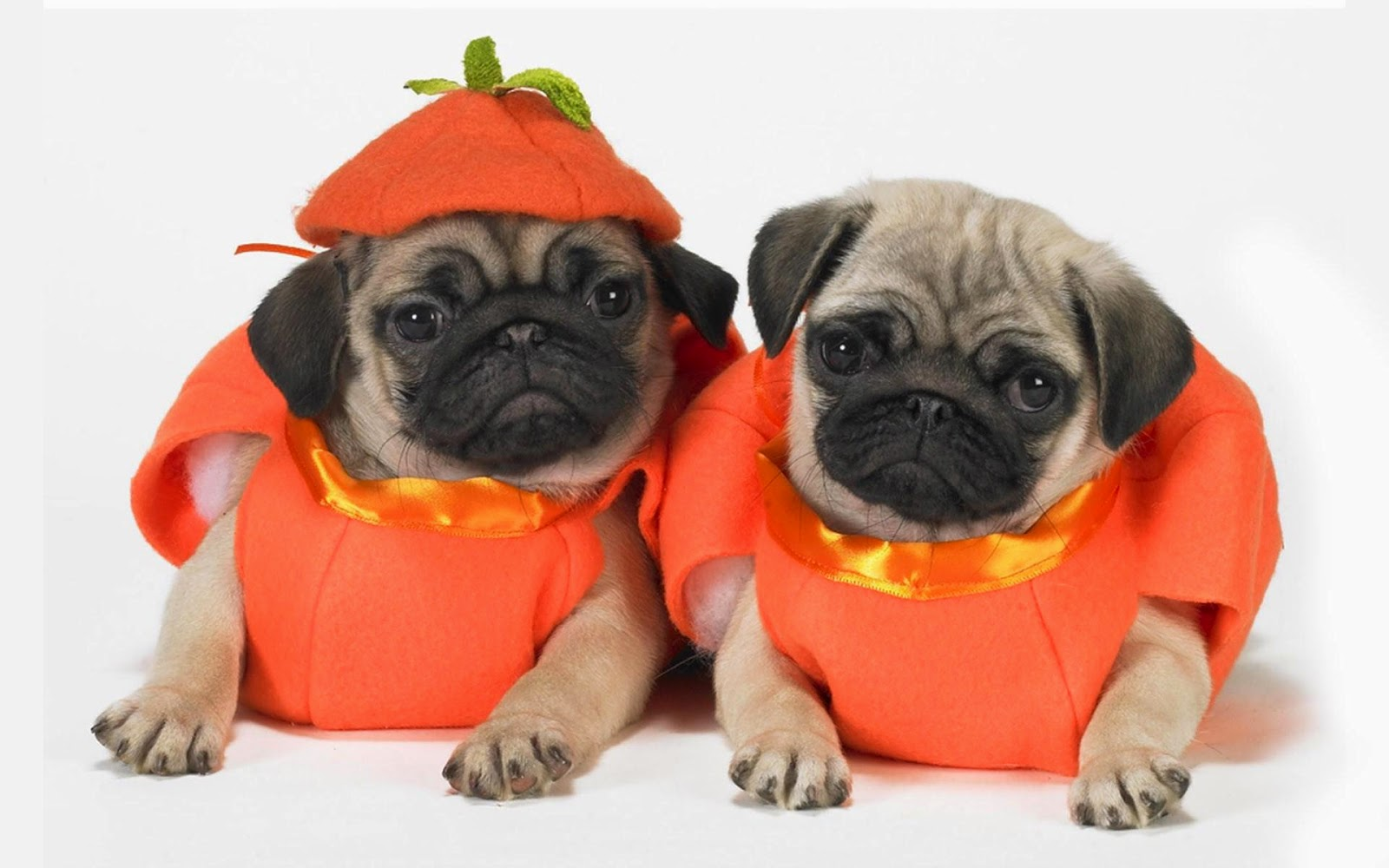 Halloween Dogs love cute Wallpapers - HD Wallpapers Storm ...