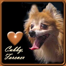 RUN FREE AND HAPPY CUBBY