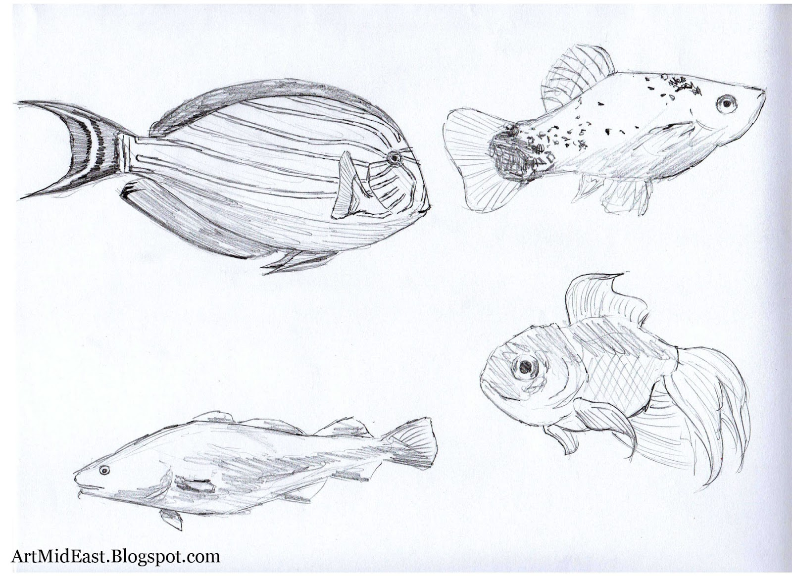 How to draw a fish step by step drawing lessons for How to draw fish