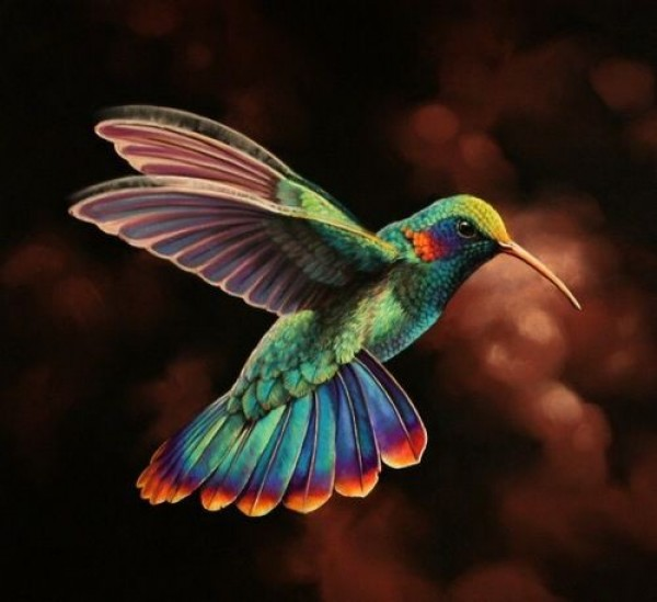 Colorful hummingbirds flying - photo#1
