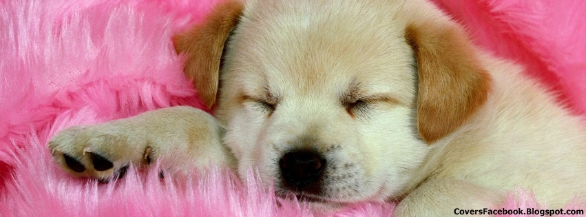 Cute Puppy Sleeping Facebook Timeline Cover