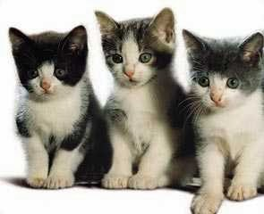 filhotes de gatos