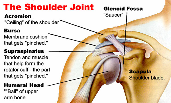 Tom\'s Physiotherapy Blog: Preventing Rotator Cuff Injuries: Advice ...