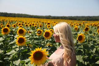 Foxy Moxie Sunflower Field