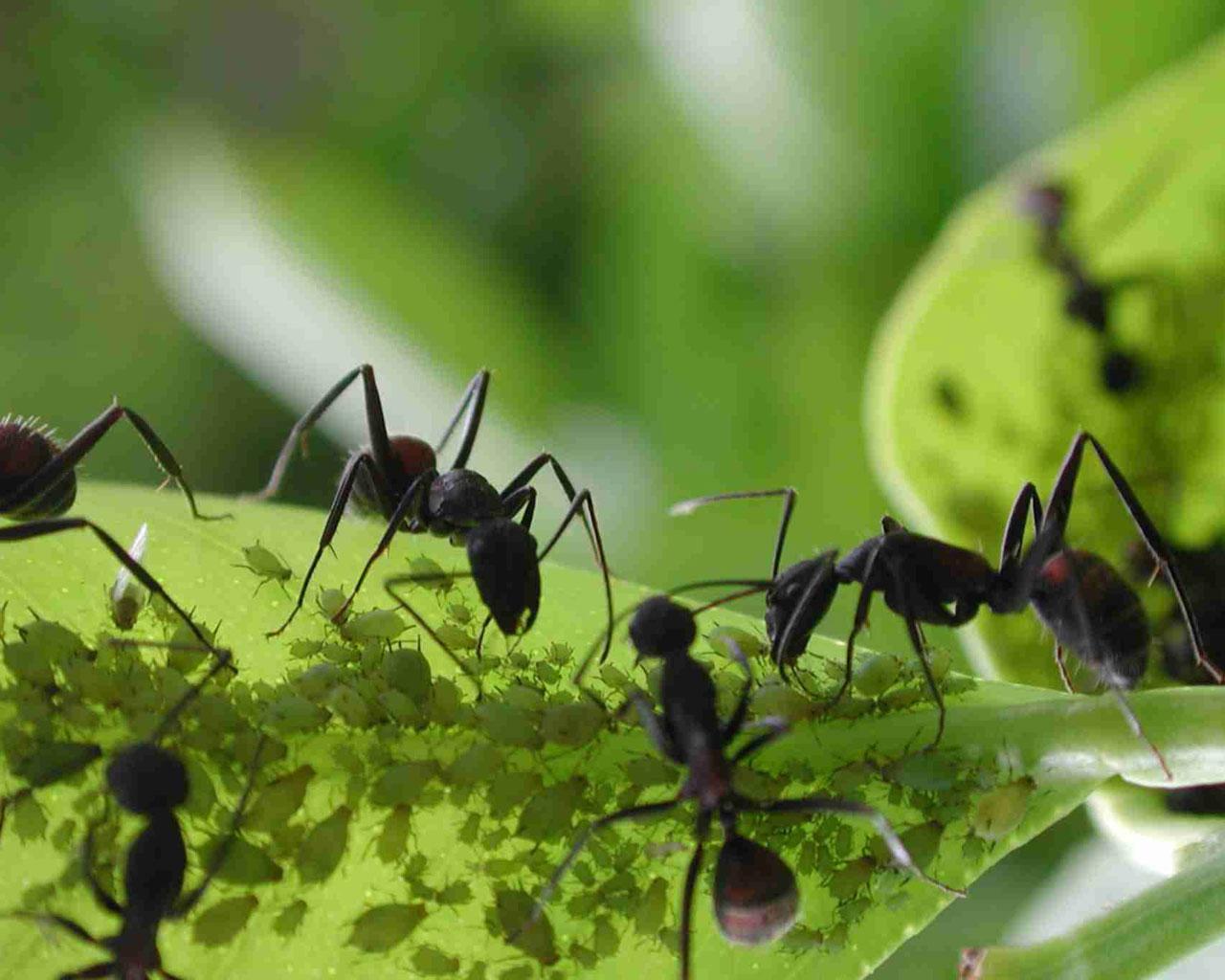 Tengo de todo un poco oidio mildiu gusanos minadores for Insectos del jardin