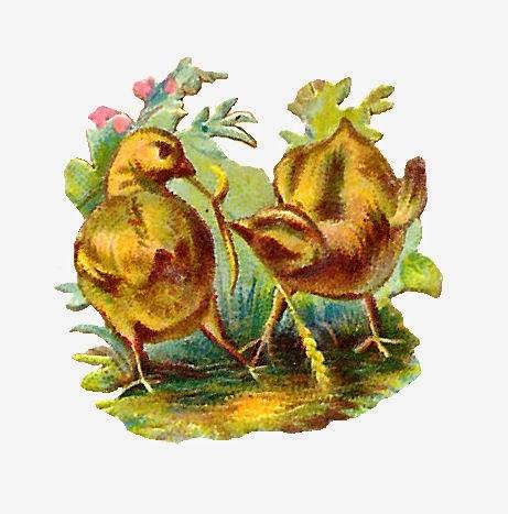 http://4.bp.blogspot.com/-N76x5Hy7jKM/U5R9wj0kkeI/AAAAAAAAURw/FXCSszPFJNU/s1600/chicks_01.jpg
