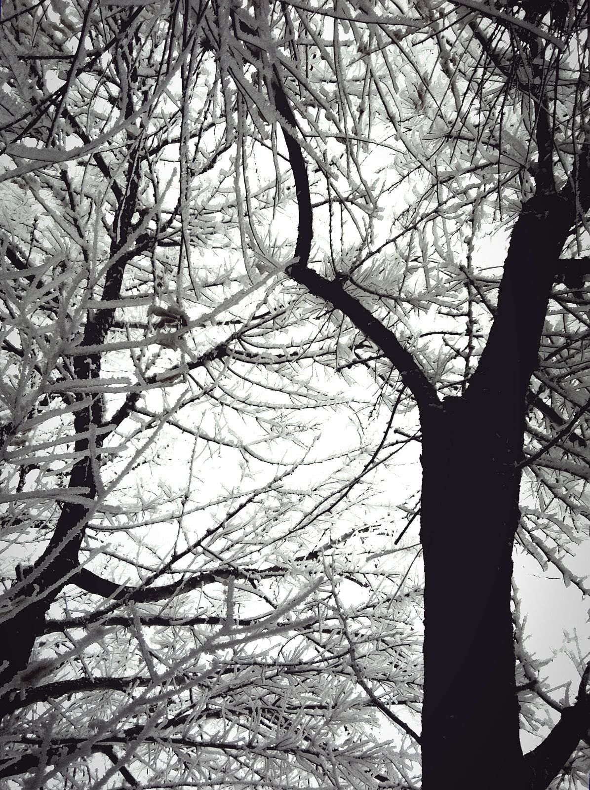 Frost and Silhouette 1, photo by Lorie Klahn (c)
