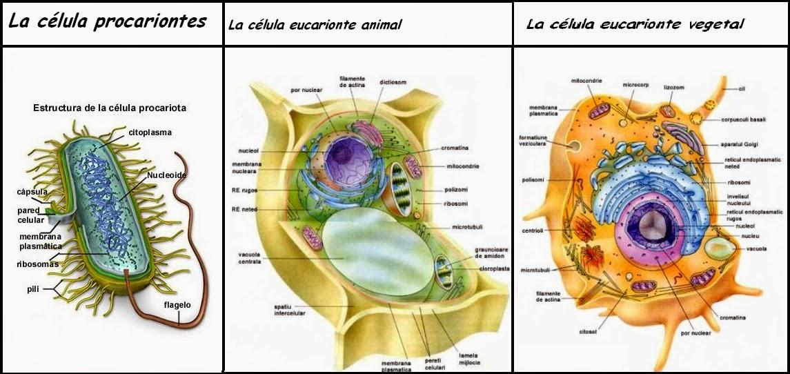 Muitas vezes Microbiología: Estructura celular y Organelos EA45