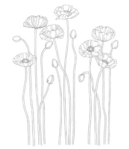Pleasant Poppies Stamp Brush - Digital Download